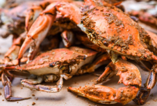 2 Unit Seafood Restaurants for Sale - Palm Beach and Broward County, FL